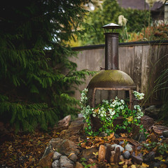 Second Life, From the Ashes (Isaac Hilman) Tags: fireplace firepit repurpose repurposed ashes growth life green stove nikon d800 f14g 50mm
