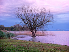 Trasimeno 7 (lotti roberto) Tags: assisi trasimeno lake sunset tramonto tree alberi umbria x20 fuji