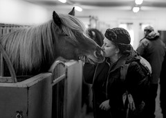 The horse whisperer (R V S Photography) Tags: iceland north hemisphere northern scandinavian icelandic canon 5d mark 4 iv 50mm pony horse tlt pace gait