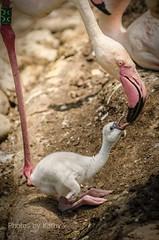 DSC_2029 ts (Photos by Kathy) Tags: cincinnatizoo animals zoo zoos nature kathymoore nikon2000 bird