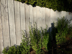 Close to Sundown (Drew Makepeace) Tags: fence weeds shadow self