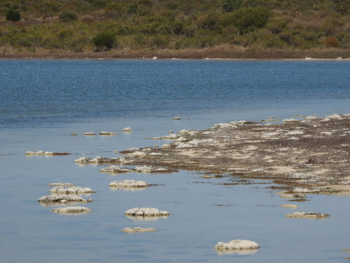Lake Thetis  and the thrombolites.