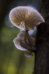 Aurol (1Florelle) Tags: champignons blanc nature fort