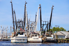 IMG_1127 (blueturtlegraphics) Tags: fortmyersbeach shrimpboats