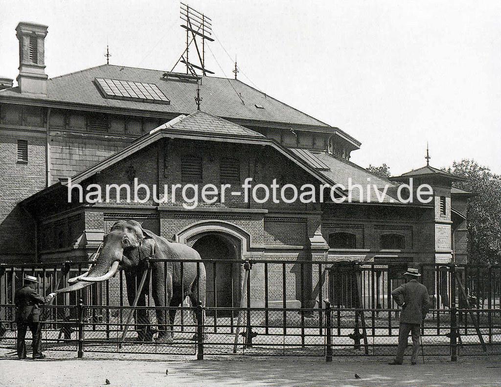 Anspruchsvoll Metallzäune Bilder Beste Wahl X0199044 Historische Aufnahme Vom Tierpark / Zoologischer