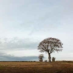 Winter (Hilary Causer) Tags: lonetree tree winter herefordshire leysters november outline bare nature rural outside landscape squareformat square photo walking