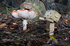 Come down from there! (Ed Swift) Tags: nationalfungusday mushroom 2470f4lis fungi danbo 7d2 revoltech canon danboard