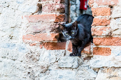Say hello to my little Friend (Steve P Photography) Tags: cat katze schwarz black small little kleine malcesine urlaub vaccation hello hallo canon eos 6d fullframe vollformat vf ff 2470 f4 14 iso great cute ss mauer wall italy