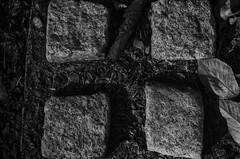 Stones of Time (TNMYcFan182) Tags: outdoor contrast nature shadows stones stone leaves blackandwhite monochrome bw shapes nikon nikond7000 nikkor nikkorlens