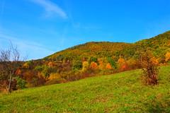 szi tj / autumn landscape (debreczeniemoke) Tags: sz autumn tj land tjkp landscape sznes sznpomps colorful oktber october domb hill erd forest rt meadow olympusem5