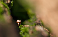 Hey there little fella (Amir Shayani) Tags: mushroom macro fall autumn yellow trees forest color beautiful green