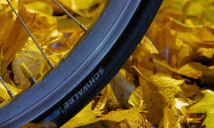308/365: Yellow/blue (Kelvin P. Coleman) Tags: canon powershot nottingham bike bicycle autumn leaves night light street wheel rim tyre 365 yellow blue texture vehicle damp wet outdoor shape form metal metallic rubber text