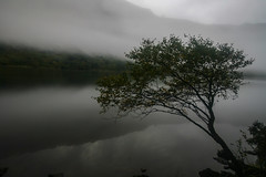 Merging (Costigano) Tags: glendalough upperlake wicklow ireland irish mist misty fog foggy tree lake water lough waterscape canon eos