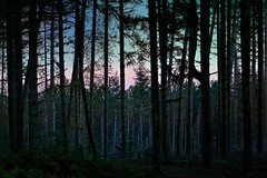 foresta del Pratomagno (M.K.S. v i d e o • p h o t o g r a p h y) Tags: arno valdarno canon canoneos70d gruppofotograficolaterinese toscana tuscany toscane tuscani tramonto marksoetebierphotography mksvideophotography marksoetebier markchristiansoetebierphotography mks foresta forest borro bosco bos