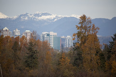 Amongst the Concrete_0151 (Mike Head - Jetwashphotos) Tags: concrete buildings highrises towers development mountains northshoremountains leaves autumn autumnleaves golden fall season fallseason delta bc britishcolumbia canada westerncanada westernregion