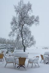 Terrasse du Mont Rigi (SchoonbrodtB) Tags: mont rigi terrasse fagnes hiver arbre hohes venn schnee winter snow