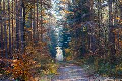 Forest Road (jaceek81) Tags: autumn jesie las forest natura polska lubuskie fujifilm xt10 xf60mm listopad november