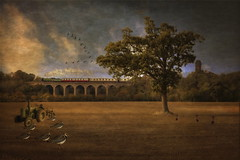 The English Countryside (brian_stoddart) Tags: countryside england trains steam tree transport viaduct tractor field birds a