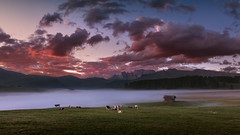 Beach (Radisa Zivkovic) Tags: mountain dawn fog meadow travel dolomites italy alps tyrol cattle cow cabin mist field peak pasture cloud idyllic highland countryside landscape nature scenery outdoor pink beautiful farm vastness moody environment chalet animal