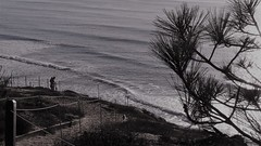 Marraige Place (Rand Luv'n Life) Tags: torrey pine state park ocean vista view point steps waves needles branch cliff man woman couple together marriage place outdoor monochrome black white fence