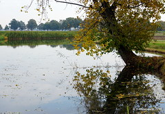 Reflectie (ditmaliepaard) Tags: reflectie bomen trees a6000 sony opdefiets omgevingheusden explored354 ngc