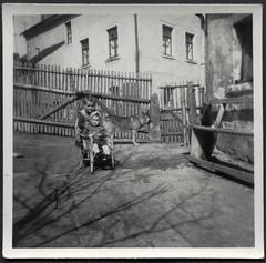 Archiv K049 Geschwister, 1950er (Hans-Michael Tappen) Tags: archivhansmichaeltappen landwirtschaft kinder mdchen kind child children hund dog gartenzaun holzzaun kinderstuhl korbstuhl kopftuch scarf schferhund outdoor fotorahmen 1950s 1950er