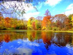 Reflection (dimaruss34) Tags: newyork brooklyn dmitriyfomenko image sky clouds reflection fall autumn foliage prospectpark