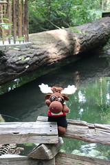 IMG_0673 (The Crochet Crowd) Tags: crochetmoose amigurumi moose crochet doll alaska britishcolumbia thecrochetcrowd michaelsellick jeannesteinhilber danielzondervan crochetcruise mooseontheloose
