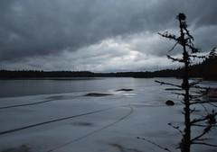 DSC_4128 (Unknown Explorer from Finland) Tags: kirkkonummi kirkkonummimeiko luonto luontokuva suomi finland