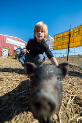 Campbell and his new best friend (Ben McLeod) Tags: pig birthdayparty campbell sauvieisland bellafarms