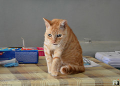Pippo (.Vale.) Tags: cats baby animals cat kitten feline kitty kittens gatto gatti rifugio micio micia gattino gatta catshelter gattini micini