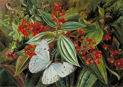 north_trees_laden_with_parasites_epiphytes_brazilian_garden_1873 (Art Gallery ErgsArt) Tags: museum painting studio poster artwork gallery artgallery fineart paintings galleries virtual artists artmuseum oilpaintings pictureoftheday masterpiece artworks arthistory artexhibition oiloncanvas famousart canvaspainting galleryofart famousartists artmovement virtualgallery paintingsanddrawings bestoftheday artworkspaintings popularpainters paintingsofpaintings aboutpaintings famouspaintingartists