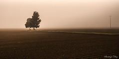Lone tree (StgoDiaz) Tags: cold tree mañana arbol foggy windy pasto campo lone lonely soledad niebla solitario siembra huerto