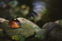 At peace (Tammy Schild) Tags: autumn reflection fall nature water season leaf moss october rocks colorful serene tranquil