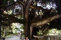 Natural monument (roksoslav) Tags: nikon croatia cypress hvar dalmatia 2015 franciscanmonastery sigma18125mm d7000 čempres