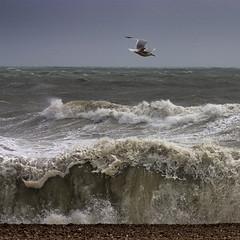 221 Brighton, East Sussex, June 2012 (Adrian Talbot) Tags: ocean surf moody shingle shoreline dramatic windy foam pebblebeach rough mothernature englishchannel hightide breakingwave herringgull crashingwave stormysea talbotgallery talbotgallerycouk