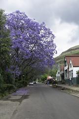 JobergtoKruger_151022_006p-sml (Stocktonlad) Tags: landscape southafrica places jacarandatree pilgrimsrest treeswoods