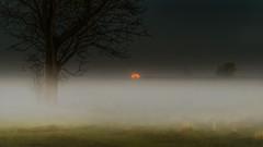 Through the fog (piotrekfil) Tags: sky moon mist tree nature fog night landscape pentax dusk poland moonrise piotrfil