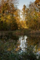 2015-11-01_Q8B3967 © Sylvain Collet.jpg (sylvain.collet) Tags: autumn france nature automne sur marne vairessurmarne vaires
