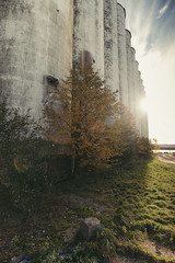 Collingwood | Ontario (William Self) Tags: collingwood ontario canada autumn fall 2016 sonya6300 collingwoodterminalslimited grainelevator
