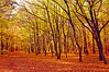 Happy Tree-mendous Tuesday, everbody! :) (Paulina_77) Tags: park autumn trees light shadow orange sun sunlight color colour green fall nature colors leaves yellow contrast forest season landscape carpet gold golden daylight high intense bush alley woods nikon scenery colorful warm mood glow glare angle bright outdoor path vibrant wide scenic vivid sigma poland polska sunny ground wideangle tunnel scene foliage shade glowing rays colourful sunlit footpath bushes 1020 autumnal beams sparkling hdr lodz łódź sigma1020mm d90 pelette łagiewniki nikond90 1020mmf4056 pola77