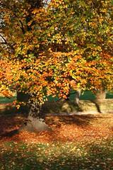 Autumn light (lgh75) Tags: autumn paris leaves automne feuilles parcmontsouris