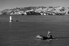 Monochrome Marin (JB by the Sea) Tags: ocean sanfrancisco california blackandwhite bw pacific marin pacificocean landsend goldengate marincounty lincolnpark november2015