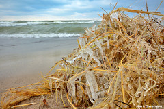 Beach Icicles (mswan777) Tags: winter sky lake cold ice beach nature water up grass clouds outdoors sand nikon waves close wind michigan great lakes scenic sigma 1020mm d5100