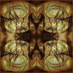 New Year Sunrise (Shastajak) Tags: trees sunlight sunrise newyearsday happynewyear mirroring sliderssunday photoshopcc
