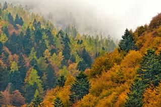 Fog in Val Vigezzo