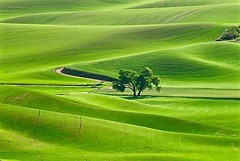 _DSC1469 (christinachui79) Tags: landscape tones shade shadow hill light beautiful 2016 trees colours nature green outdoor outdoors wheatfield farm countryside nikon colour field tranquil serene tree palouse wheat colfax agriculture