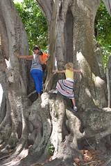 610_5499 (amslerPIX) Tags: florida girl tree