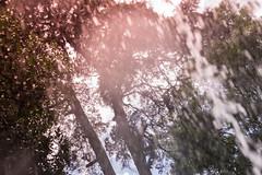 splash (ands91) Tags: bokeh agua chorro congelado desenfoque gotas guatemala water stream frozen blur drops água córrego borrão eau ruisseau congelés flou gouttes acqua ruscello congelato sfocatura gocce