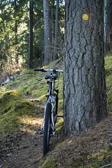 Turingeleden, smiley #3-1 (George The Photographer) Tags: smiley ansikte turinge skog turingeleden stig gul prick mtb logan bicycle cykel ryggsck utflykt sdermanland humor trd trdstam vandringsled tall fura sweden vidbyns se